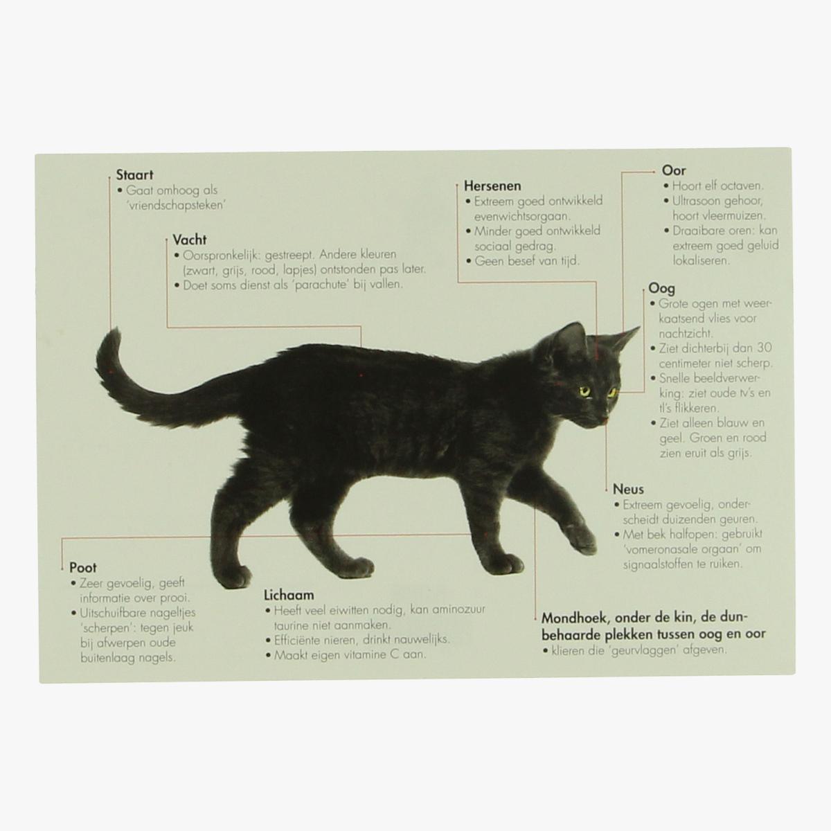 Afbeeldingen van postkaart kat