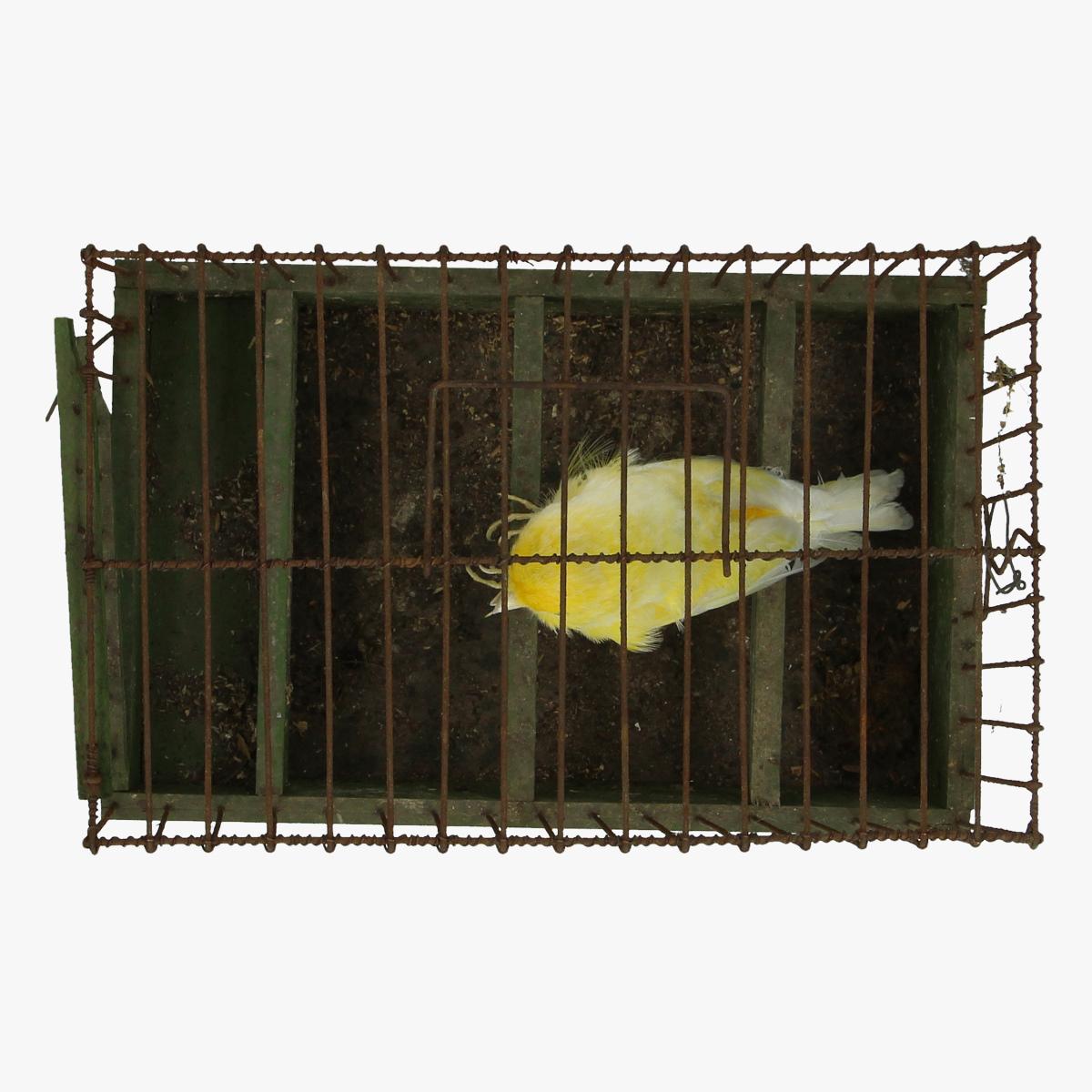Afbeeldingen van opgezette kanarie in kooi