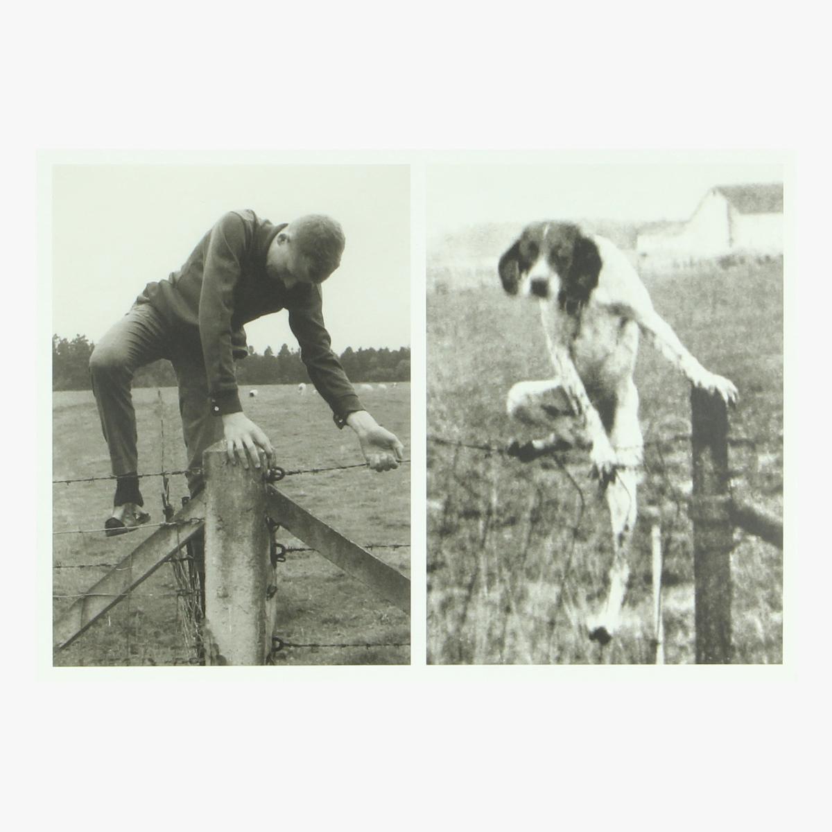 Afbeeldingen van postkaart coll jan de smet 2012 press foto dog / life 4/7/1949