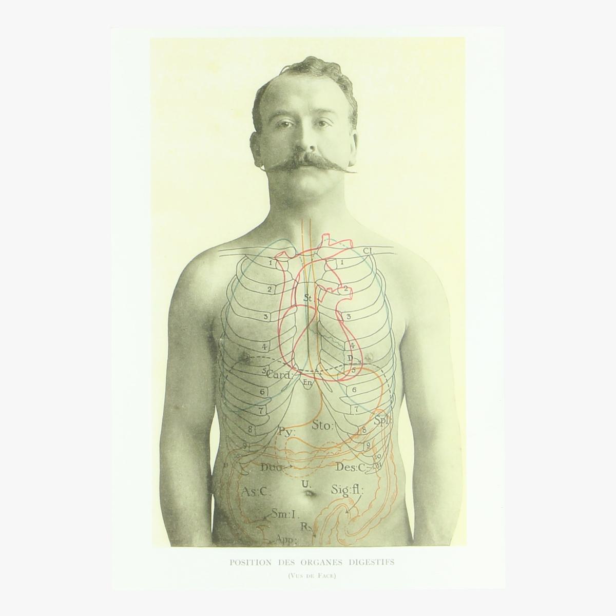 Afbeeldingen van postkaart positions des organes digestifs