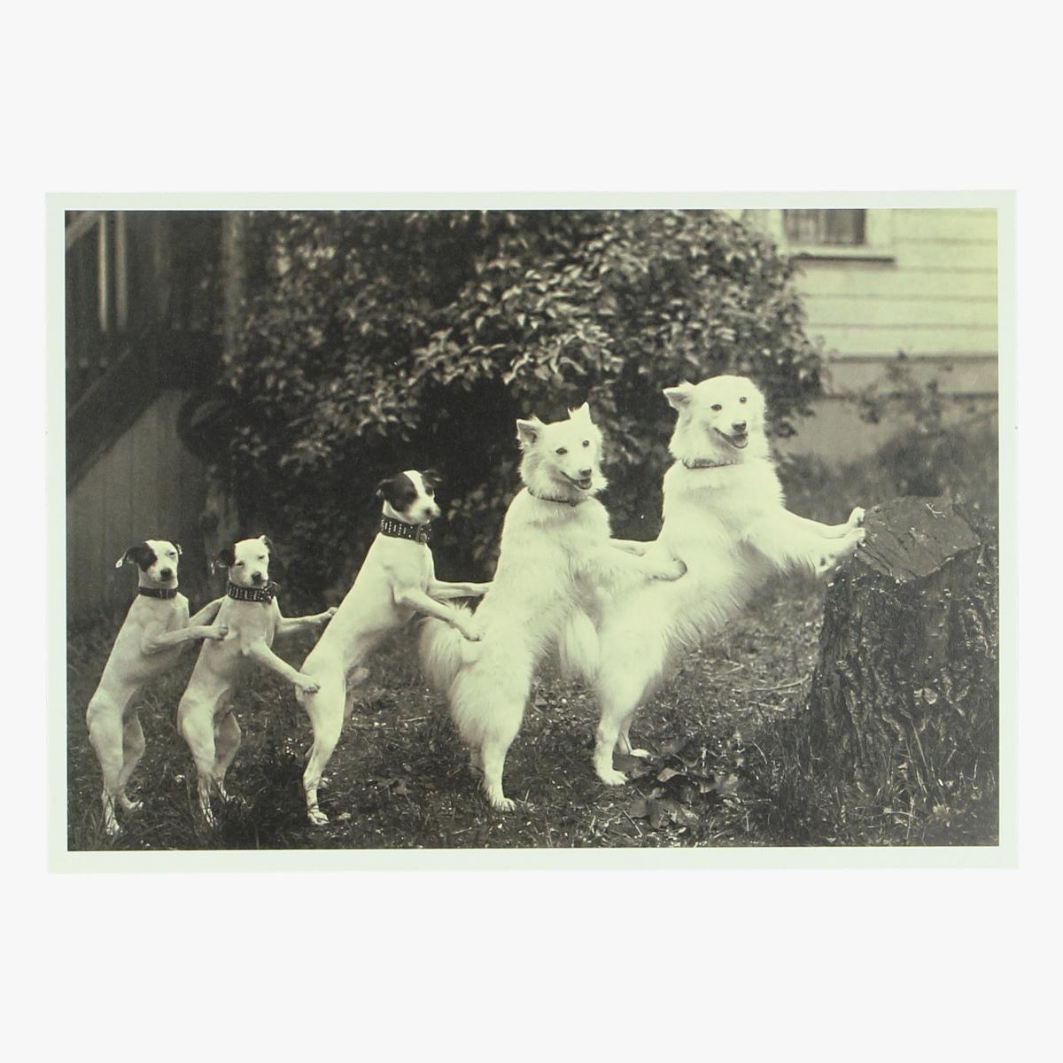 Afbeeldingen van postkaart hond anonymes V.S-Etats-Unis(1920) repro